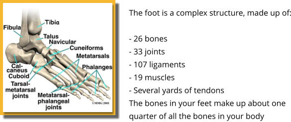 The foot is a complex structure, made up of:  - 26 bones - 33 joints - 107 ligaments - 19 muscles - Several yards of tendons The bones in your feet make up about one quarter of all the bones in your body